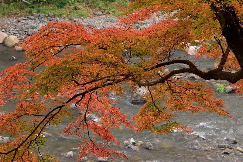 天神峡の紅葉14