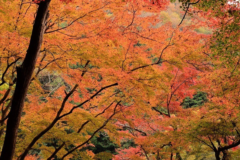 天神峡の紅葉13