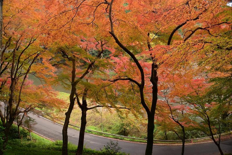 天神峡の紅葉10