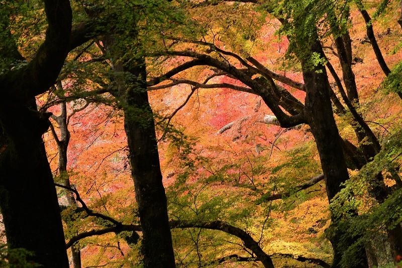 天神峡の紅葉15