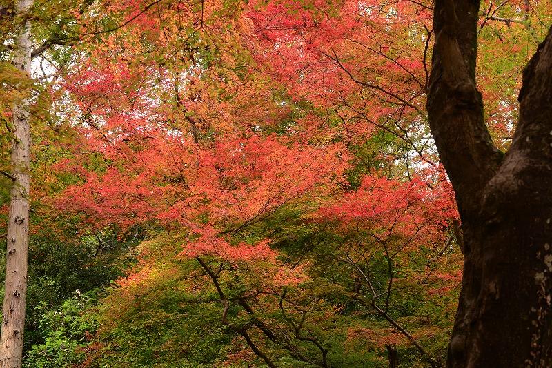天神峡の紅葉9