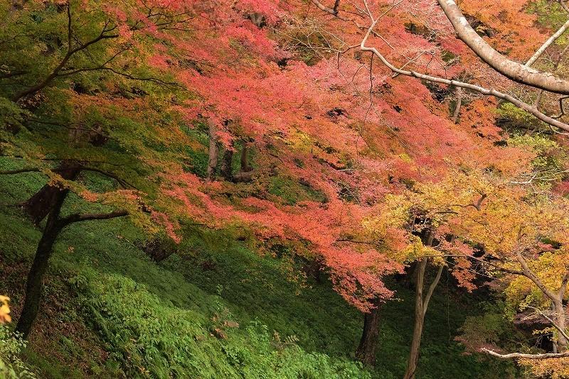 天神峡の紅葉8