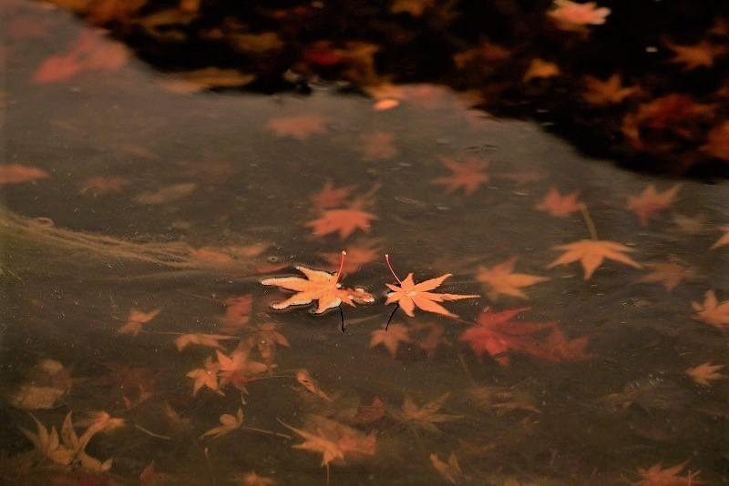 まきび公園の紅葉7