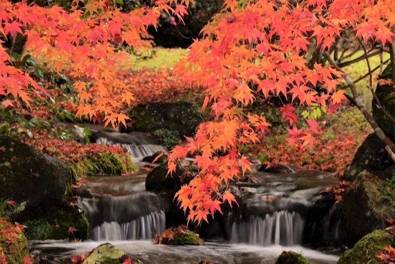 まきび公園の紅葉9
