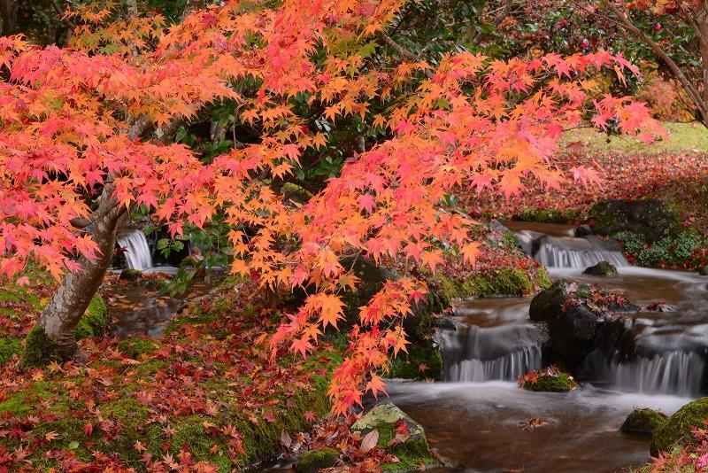 まきび公園の紅葉10