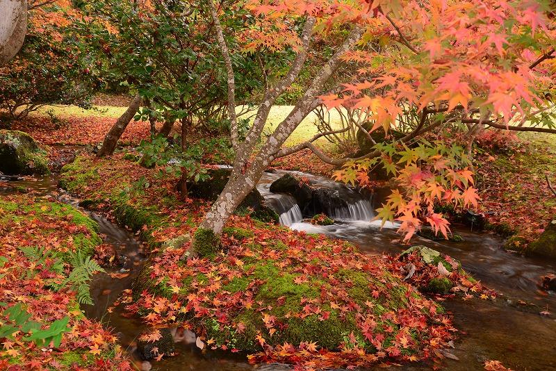 まきび公園の紅葉11
