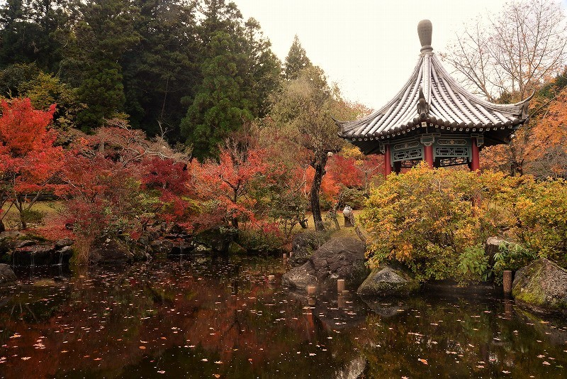 まきび公園の紅葉1