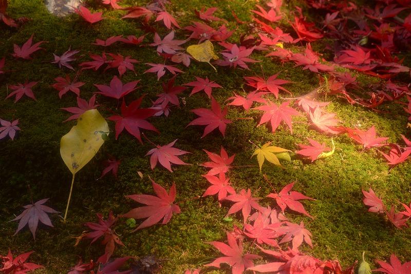 曹源寺の紅葉15