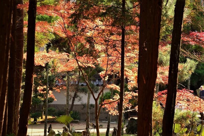 曹源寺の紅葉3
