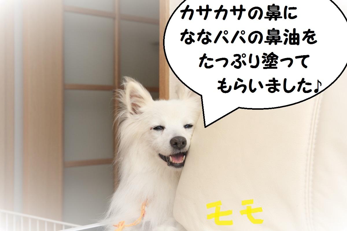 1_2016102701481260d.jpg