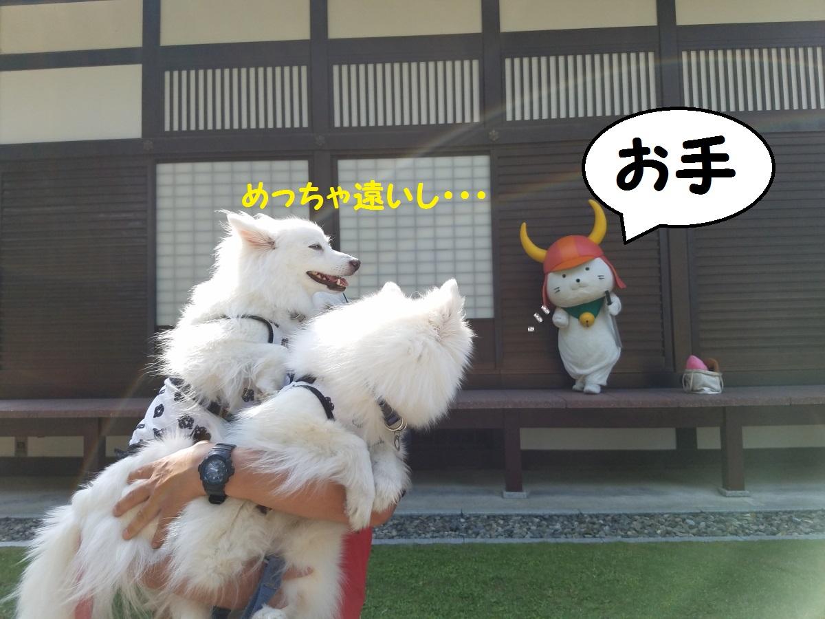 20160531_152146.jpg
