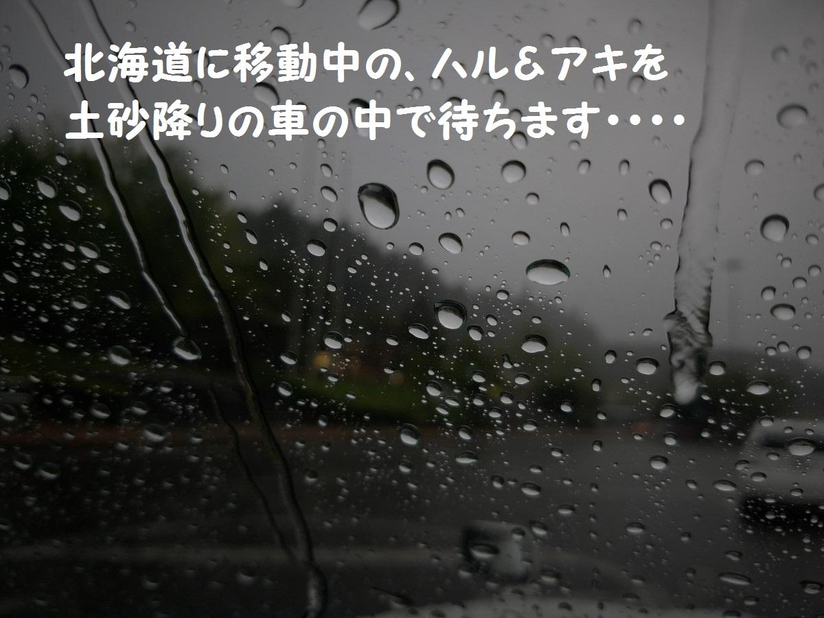 20160826_130549.jpg