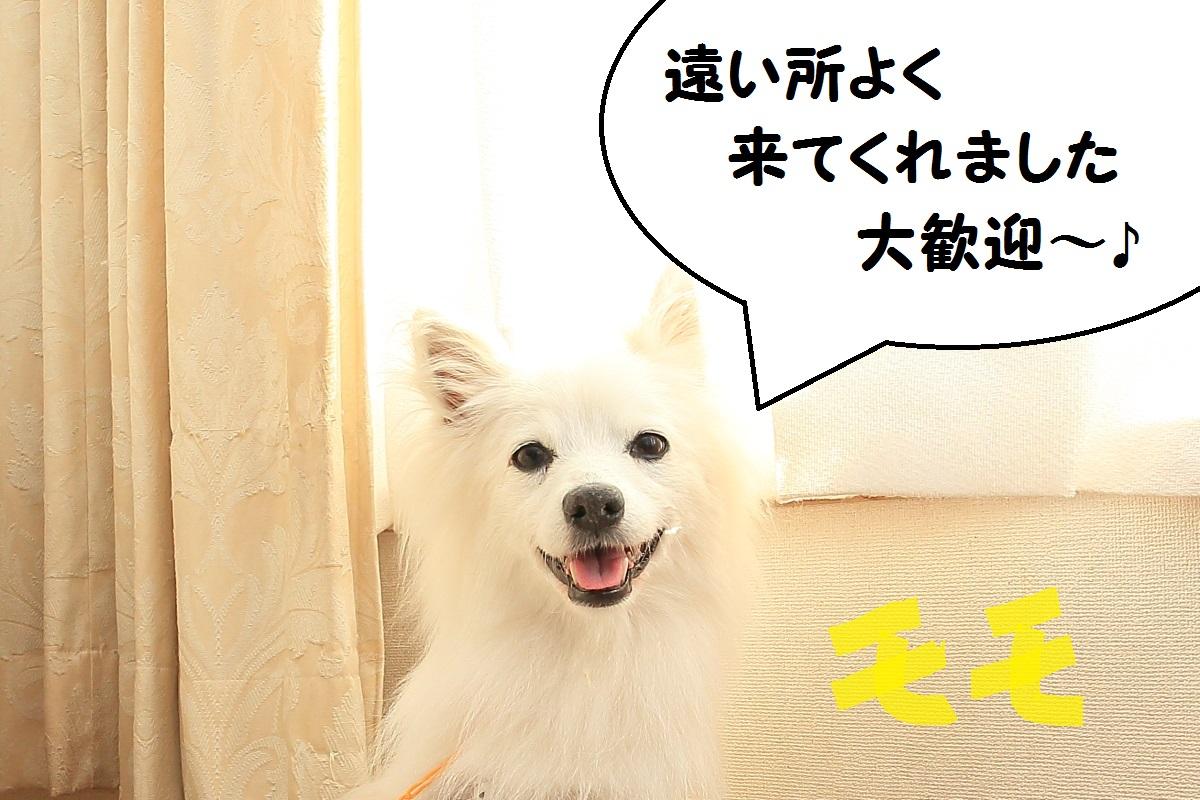 2K5A8942 - コピー