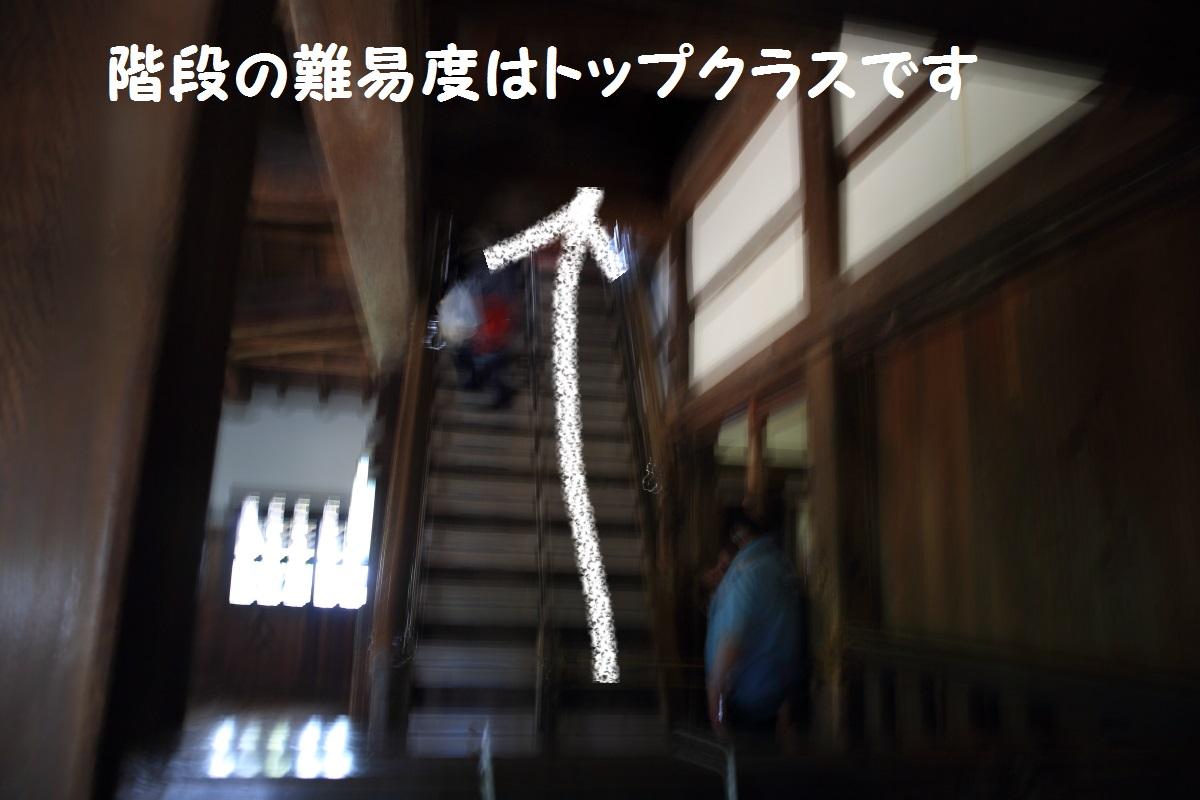 2K5A4683-1.jpg