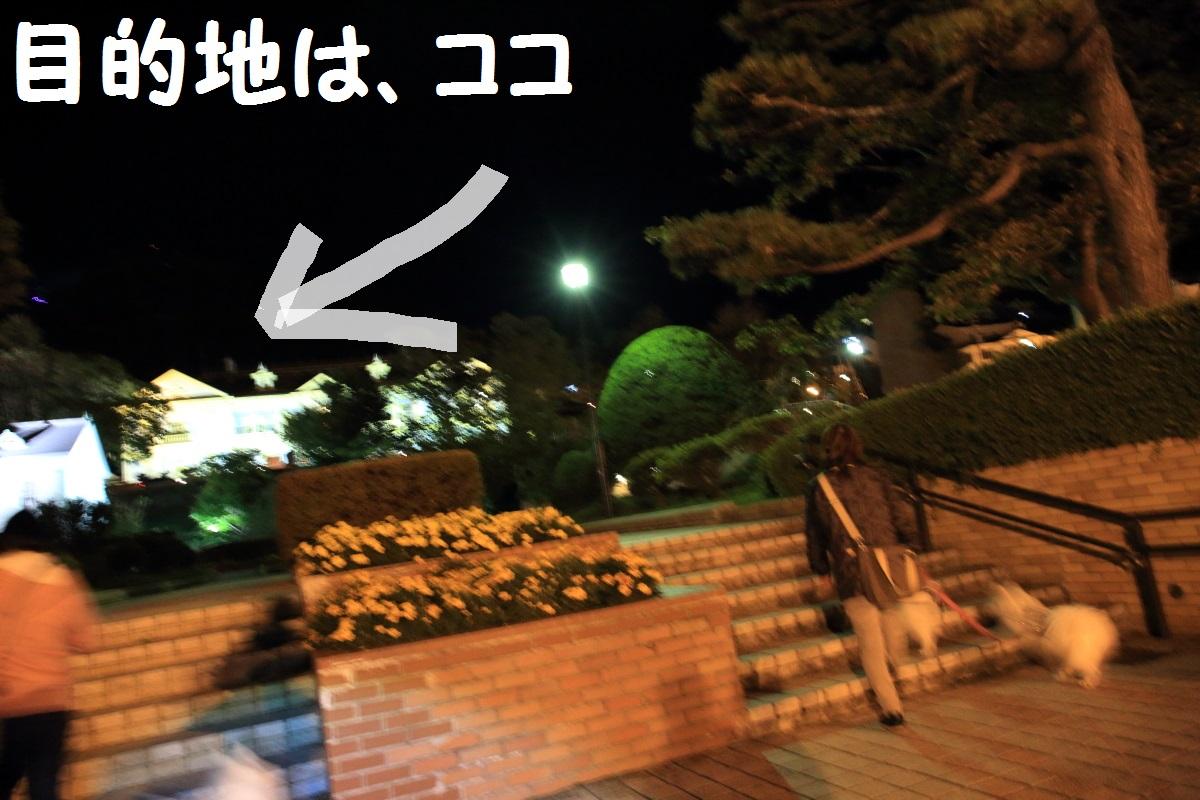 2K5A8879.jpg