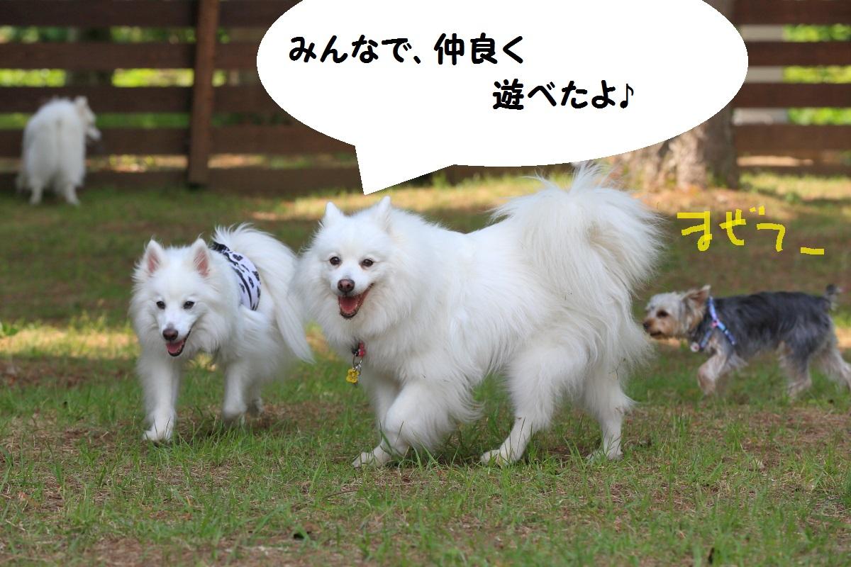 5_20160917230304e0c.jpg