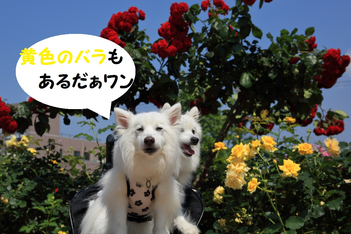 9_20160821203405f4b.jpg