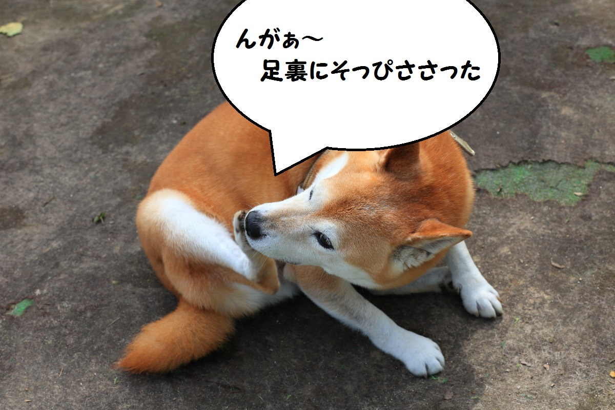 9_201609281523005ac.jpg