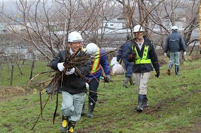 桜並木清掃2016-4-19 0531