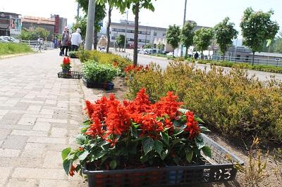リタロード植栽 2016-5-28 (16)