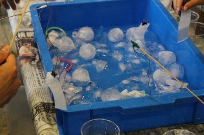 中央水産試験場一般公開 2016 131