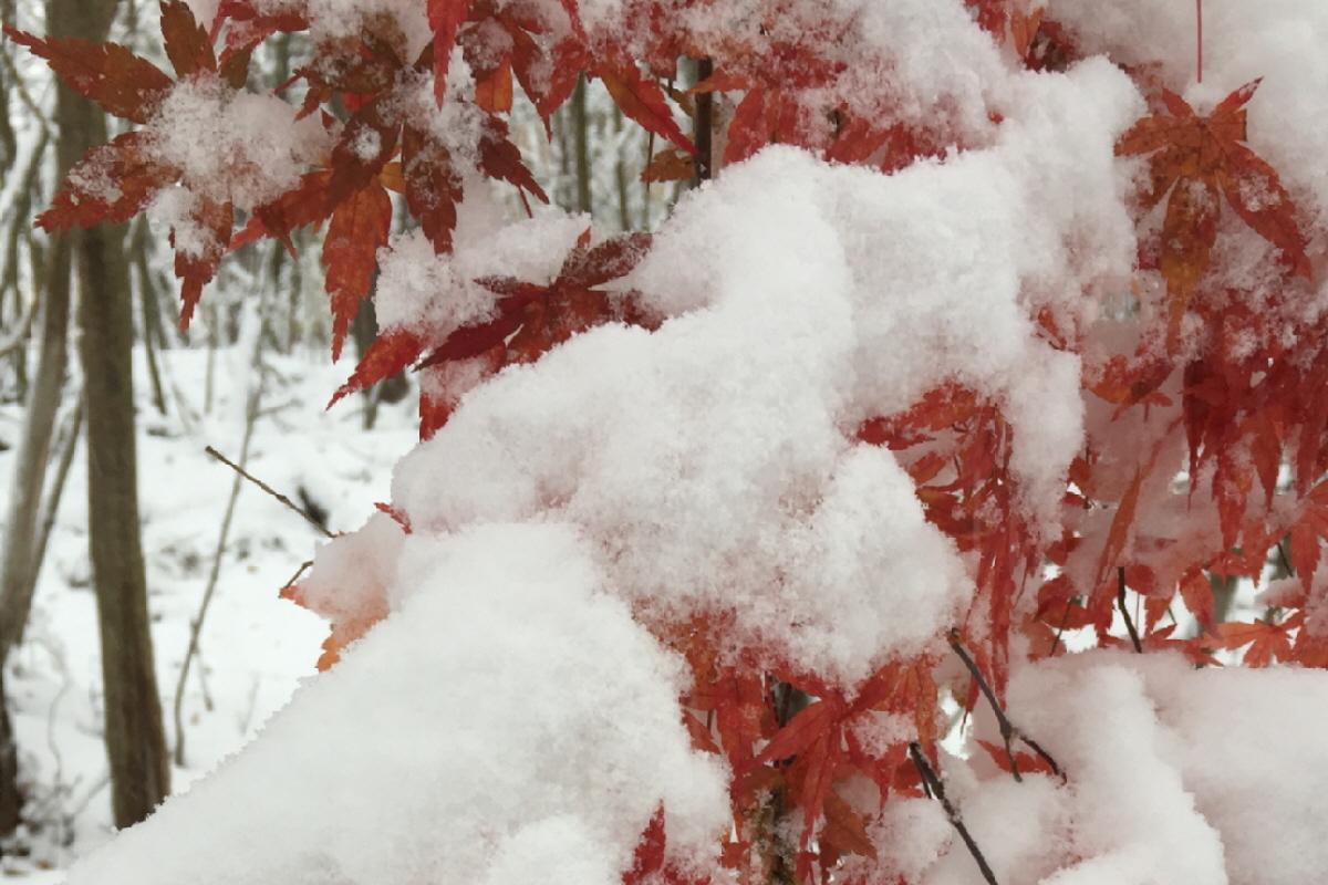 富士山隠れスポット紅葉と雪2