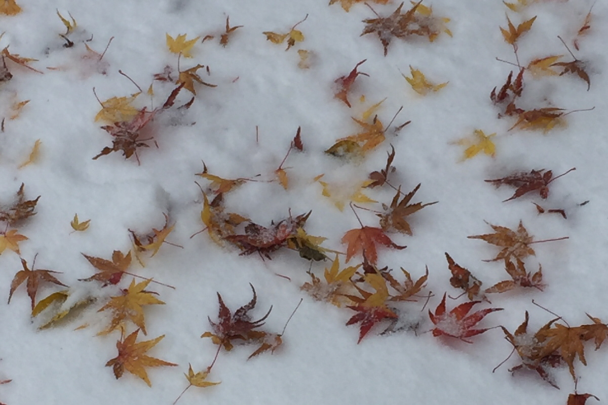 富士山隠れスポット紅葉落ち葉