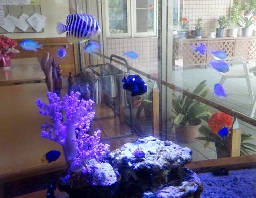 DSC05489熱帯魚