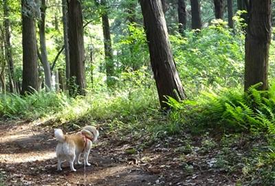 DSC05542若葉の森とカノン