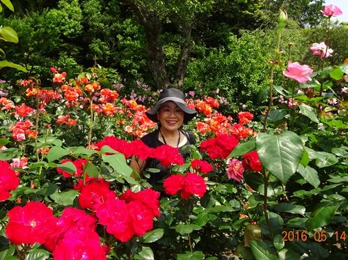 DSC05714吉田茂邸バラ園の中で