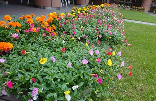 DSC06306シャロームのお花