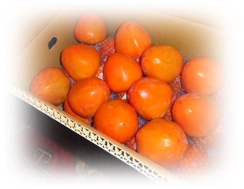 DSC07235富士柿