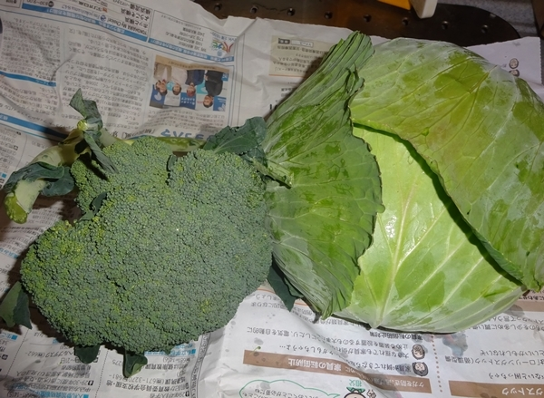 DSC07379直売所の野菜