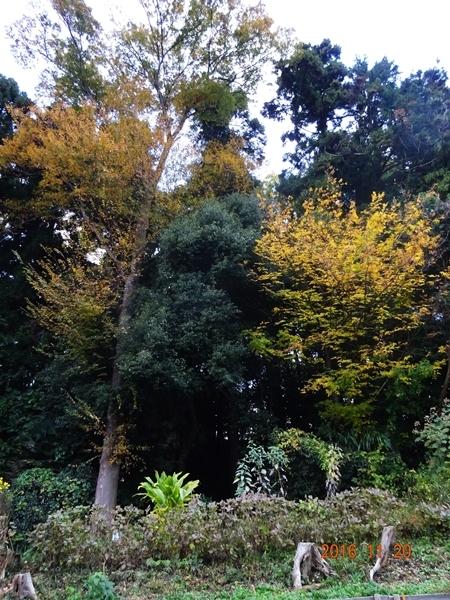 DSC07391秋の色家の前の森