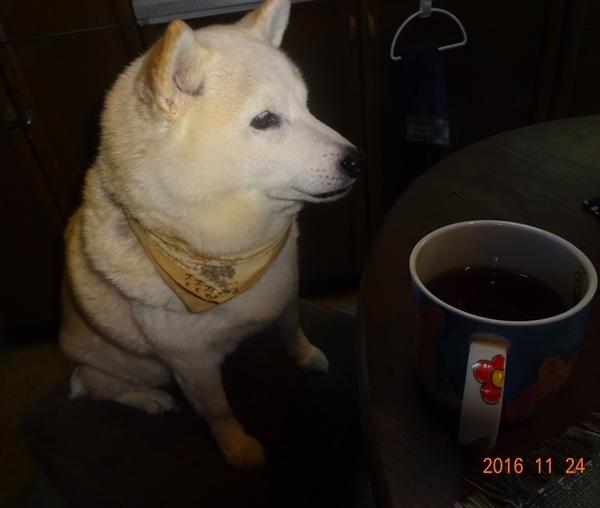 DSC07415お茶にしようのカノン