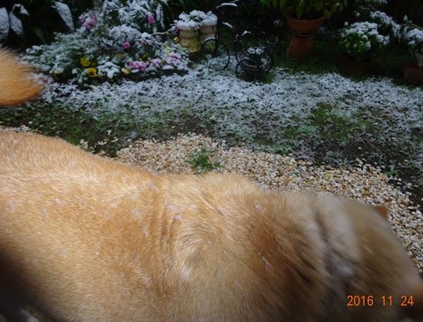 DSC07412初雪