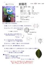 20160604 (6)レシピ:紫陽花
