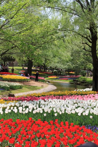 昭和記念公園 リオン君00001445