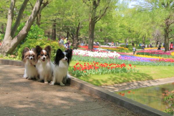 昭和記念公園 リオン君00001427