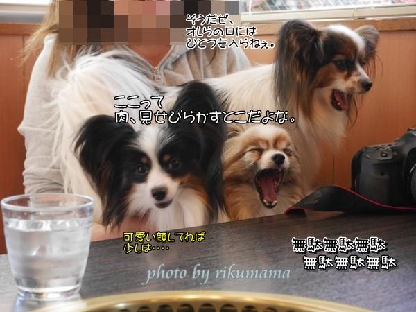 2016_04_15 rikumama0002_xlarge