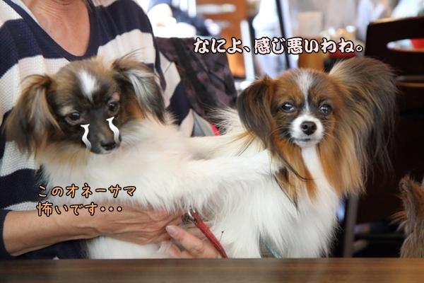 2016_04_15 春の定例会定例会 春00001923