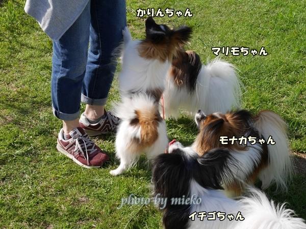 2016_04_15 mieko0025_xlarge