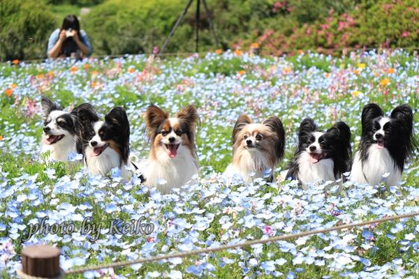 2016_04_26 昭和記念公園0030_original