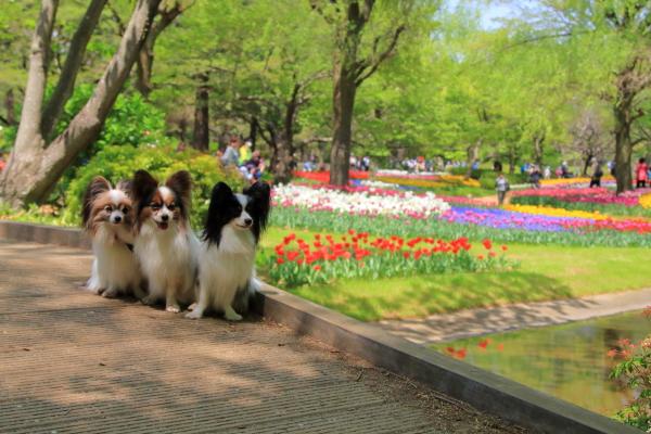 昭和記念公園 リオン君00001428