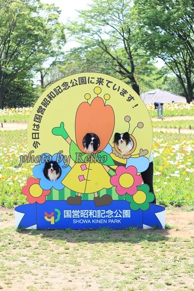 2016_04_26 昭和記念公園0207_original