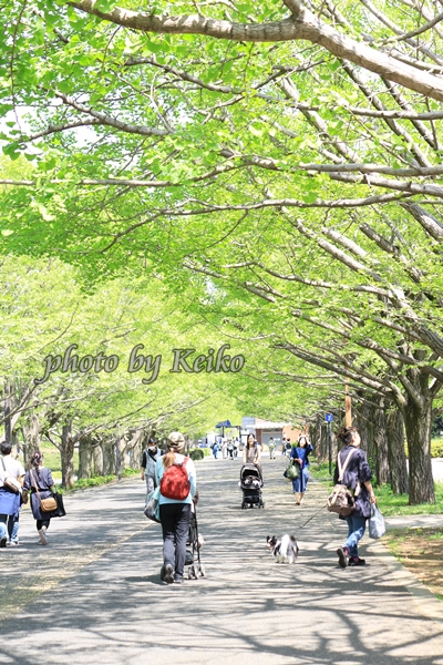 2016_04_26 昭和記念公園0271_original