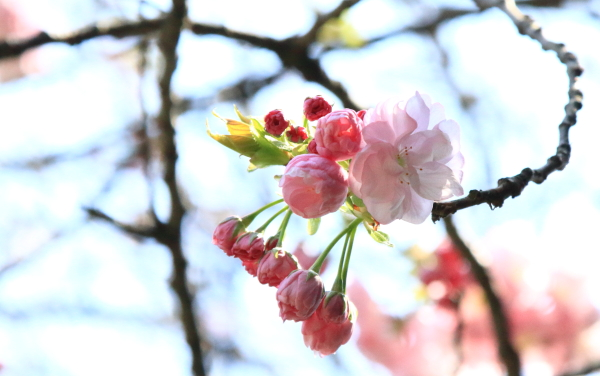 四季の森2016_04_1200000588四季の森公園 春