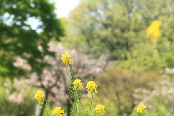 四季の森2016_04_1200000539四季の森公園 春