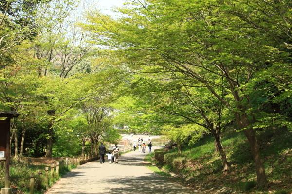 四季の森2016_04_1200000532四季の森公園 春