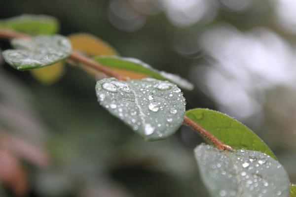 IMG_7572雨の日に遊ぶ雨の日に遊ぶ